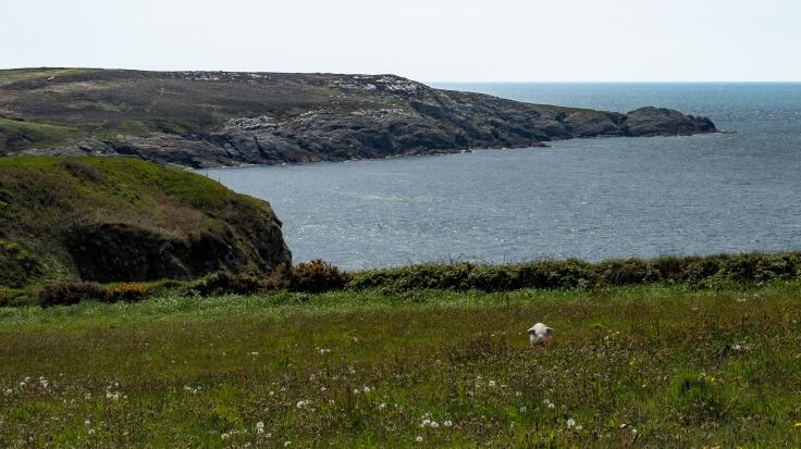 CoastalPath-10113.jpg